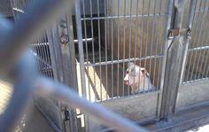 Desperately needing some permanent loving! At the OC Shelter in Orange, Ca