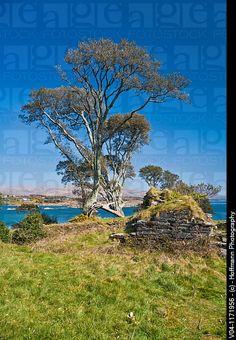 The remains of Dunboy castle on the Beara Peninsula, County Cork, Ireland, Europe (My family ancestry O'Sullivan history)