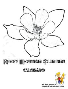 Columbine Colorado Flower Pic at YesColoring