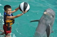Not sure who is having more fun, the dolphin or the child!