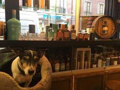 Nikka brought the goodies for today's barrel top tasting from gin to single malt there's loads to try! #milroysofsoho