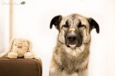 Self-control Yummypets, social petwork Happy Animals, Funny Animals, Funny Pets, All Types Of Dogs, Self Control, Dogs Of The World, Pet Memorials, Animal Pictures, Dog Lovers