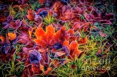 Digital Art - Maple Leaves 2 by Veikko Suikkanen , Maple Leaves, Fine Art America, Digital Art, Design Inspiration, Wall Art, Artwork, Artist, Painting, Work Of Art