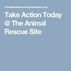 Take Action Today @ The Animal Rescue Site