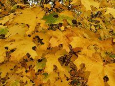 Fotó itt: Fenyőgyöngye-Kecske-hegy-Árpád pihenő 2013.10.14 - Google Fotók