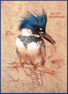 Belted Kingfisher (117 pieces)