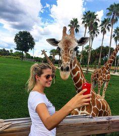 Tampa - FL  - O Busch Gardens é um parque incrível para quem gosta de aventuras cheio de montanhas-russas radicais zoológico shows ao vivo restaurantes lojas e jogos. Da última vez que estive por lá fiz um passeio pelo Safari onde é possível ver e aprender sobre os animais do parque. Fiquei encantada com as girafas e com o contato que podemos ter com elas. É possível tocá-las alimentá-las e a experiência rende fotos como essa. O passeio dura 30 minutos e o valor varia de US$ 29 a US$ 39…