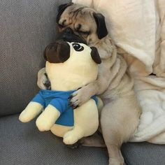 """""""I like to snuggle when I sleep.""""  #pugpower #puglove #pug #puglife #pugsofinstagram #puglove #pugpuppy #pugstagram"""