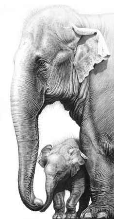 - Painting Art by Gary Hodges - Nature Art & Wildlife Art - Specialising exclusively in graphite pencil drawings. Asian Elephant, Elephant Love, Elephant Art, Elephant Tattoos, Elephant Drawings, Alabama Elephant, Cool Pencil Drawings, Pencil Drawings Of Animals, Amazing Drawings