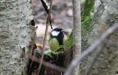 Norske vinterfugler - Dyr - Naturfakta Bird Feeders, Outdoor Decor, Animals, Home Decor, Animales, Decoration Home, Animaux, Room Decor, Animal