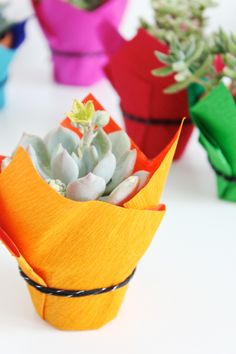 Crepe Wrapped Succulents | Mandy Pellegrin of Fabric Paper Glue for Shop Sweet Lulu