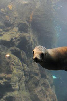 I love seals.