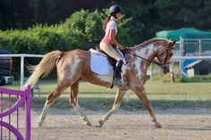 Maverick (Mav) is now looking for his new forever home and person! Appaloosa Horses For Sale, Wappingers Falls, Trail Riding, 13 Year Olds, Beautiful Horses, New York, Animals, Horses, Pretty Horses