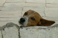 You can't save all the dogs in the world but you can save the world for one dog - Fabienne Paques