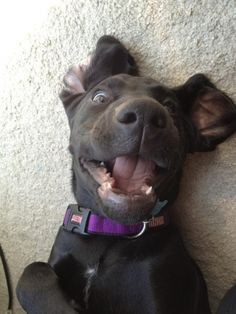 Belly rub = happiness