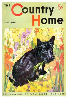 Country Home 1934-07  Little scotty dog seems abashed as you discover him chewing his way through your flower bed. Bad dog deserves punishment and a lesson.     Artist: Jack Murry  Source: eBay seller daysoffuturepast, who also sells printed materials from her personal website.  Restoration by: magscanner