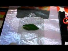 Холодный фарфор Рецепт прочного и гибкого ХФ - YouTube