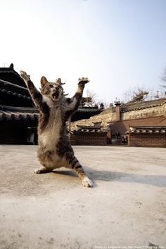 After Po being made Dragon Warrior, this cat thought otherwise.