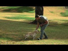 Lucky Dog - Off Leash Training - YouTube