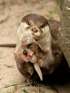 I made this ~ Otter