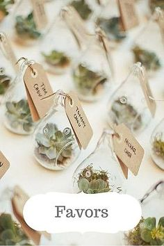 The Ultimate Succulent Wedding Guide - Favors - The Ultimate Succulent Wedding Guide - Favors - wedding decor diy Wedding Favors And Gifts, Affordable Wedding Favours, Succulent Wedding Favors, Creative Wedding Favors, Succulant Wedding, Wedding Tokens, Wedding Guest Favors, Gift Wedding, Handmade Wedding