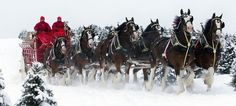 the Budweiser horses and wagon