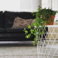 Happy Saturday to you! . #home #myhome #newhome #koti #uusikoti #remontti #renovation #hem #heminredning #kodinsisustus #sisustus #interior #interiordecor #homedecor #homeinspo #homeinterior #livingroom #livingroomdecor #ikea #greendecor #greeninterior