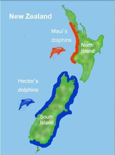 """""""WANT TO TELL YOUR HECTOR'S FROM YOUR MAUI'S DOLPHINS? Look out for some bite-sized info nuggets from my talk at the recent Biannual Conference of the Society for Marine Mammalogy over the next few days. Here's Part 1 about the dolphins distribution: Maui's dolphins (Cephalorhynchus hectori maui) live only on the west coast of New Zealand's North Island. In 2002, they were identified as a seperate subspecies of Hector's dolphins (Cephalorhynchus hectori), NZ's only native dolphin species."""""""