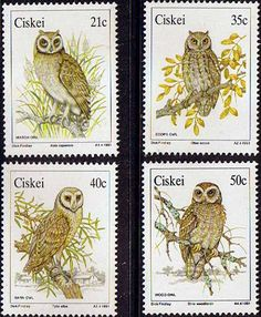 Ciskei 1991 Birds Owls Set Fine Mint                    SG 177 80 Scott 163 6 Other African and British Commonwealth Stamps HERE!
