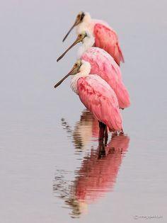 Pink Meeting