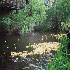 Stockbridge duck race #sundays #stockbridgeduckrace #stockbridgeduckrace2015 #stockbridge #edinburgh #stockbridgeedinburgh #scotland