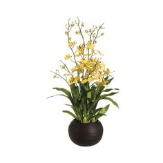 """29"""" Dancing Orchid with Sphere Vase in Yellow"""