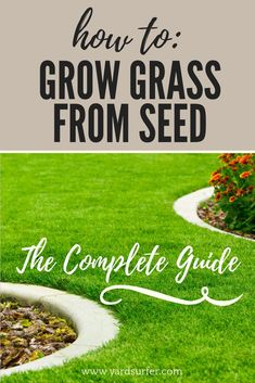 To: Growing Grass From Seed (GUIDE) The complete guide on how to grow grass from seed. Get a beautiful backyard with grass growing tips!The complete guide on how to grow grass from seed. Get a beautiful backyard with grass growing tips! Growing Grass From Seed, Planting Grass Seed, How To Plant Grass, How To Grow Grass, Best Grass Seed, Ficus, No Grass Backyard, Concrete Backyard, Lawn Care Tips