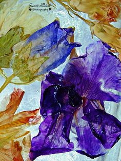 Flower Photography, Seed Pods, Frozen, Abstract, Artwork, Nature, Flowers, Image, Work Of Art
