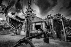 Shark in The King's park – AANESTAD IN BLACK & WHITE
