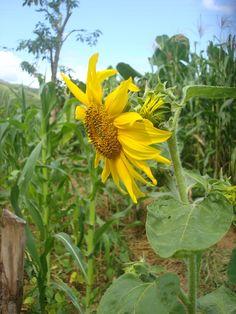 Plantar é a atividade muito nobre... um gesto de organização do solo que está sendo preparado para receber informações. A grande maiori...