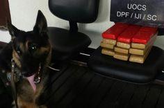 FENAPEF - Polícia Federal apreende quase 11 quilos de maconha na rodoviária de Balneário Camboriú