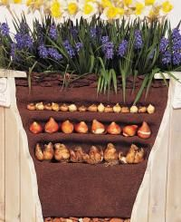 Diagram for planting fall bulbs in layered method.