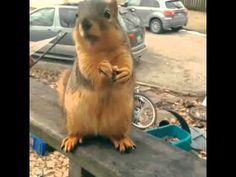 Squirrel Has an Important Message - YouTube
