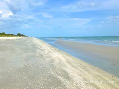 low-tide-shelling-June-2013.  Photo from iloveshelling.com.