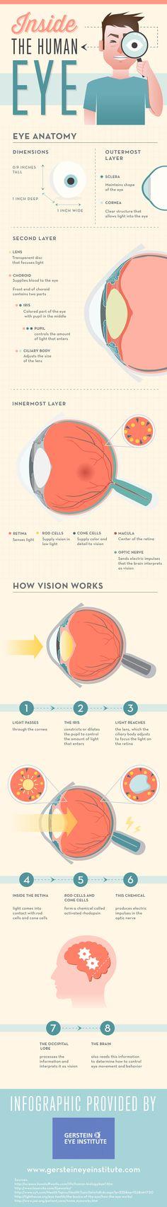 Inside The Human Eye Infographic Optometry Laser Eye Surgery Cost, Eye Anatomy, Human Anatomy, Eye Facts, Eye Sight Improvement, Healthy Eyes, Human Eye, Human Body, Medical Information