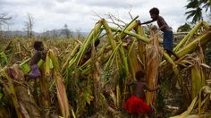 Children playing at a former banana plantation after it was hit by cycloon Pam - Mele, Vanuatu