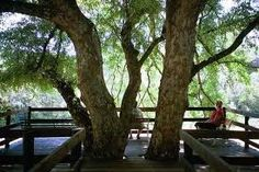 ROODEWAL BUSH LODGE - Google Search Africa, Park, Google Search, Plants, Parks, Planters, Plant, Afro, Planting