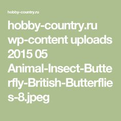 hobby-country.ru wp-content uploads 2015 05 Animal-Insect-Butterfly-British-Butterflies-8.jpeg