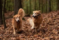 handsomedogs:  saltydogimaging Fall run in the woods