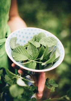kuva Seasons In The Sun, Coffee Ice Cubes, Sour Mix, Irish Coffee, Fun Drinks, Healthy Life, Serving Bowls, Homemade, Tableware