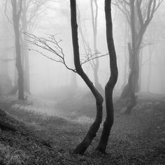 'she must look like the witch walking around the creepy woods. but she couldn't help it; she had forgotten her camera and was trying to remember all the details'