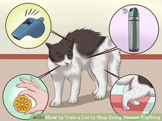 Image titled Train a Cat to Stop Doing Almost Anything Step 5