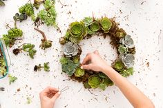 Bookmark this tutorial to make a non-traditional succulent wreath for Christmas.