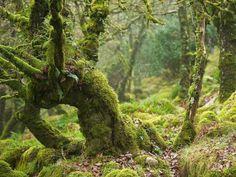 """childoftheancientforest: """"  Heart of Darkness by Duncan George """""""